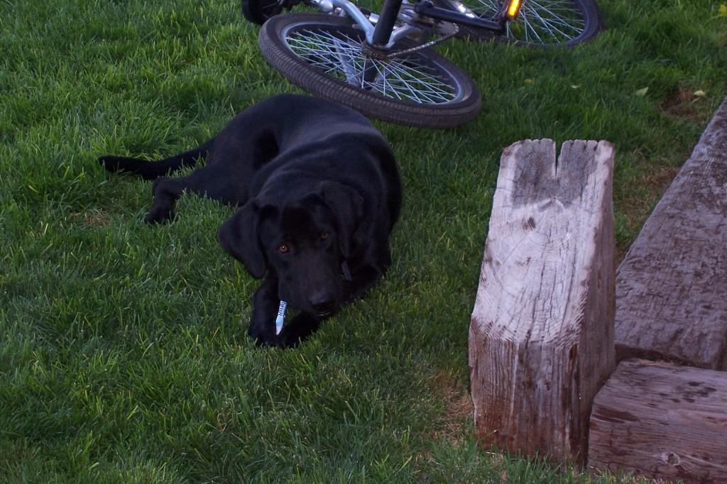 Doggone it, I really bit the dust on that last MORCA ride... (Photo of Abby, courtesy of David Leatherbury)
