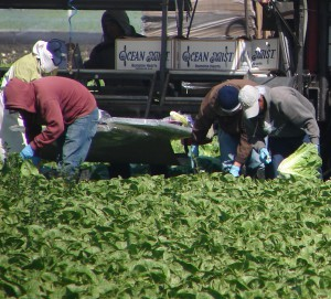 Farmworkers on 68, Salinas April 25 2012 - laboring (3)