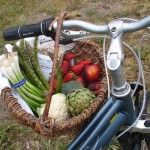 Basket of produce on my bike 004