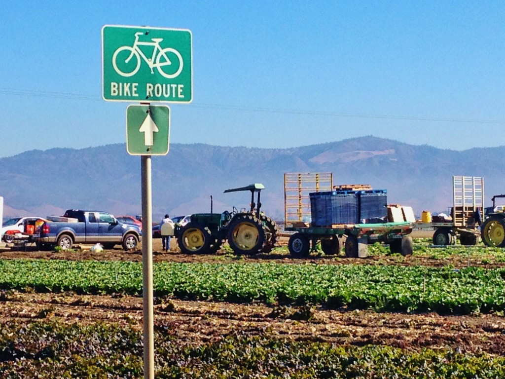 Bike route alongside Salinas Valley field